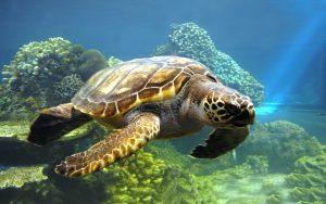 DNR: Eastern Box Turtle